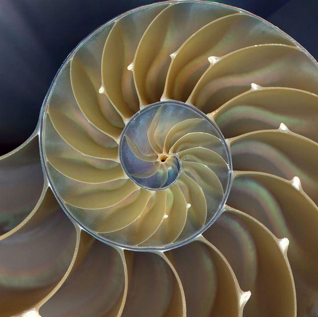 spirale_complexite